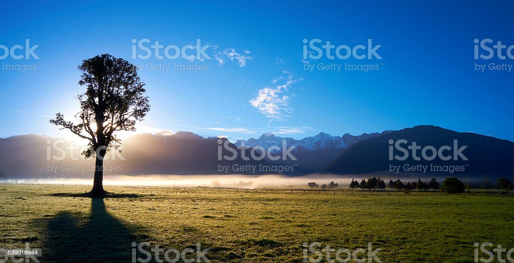 Silhouetted Tree And The Southern Alps stock photo