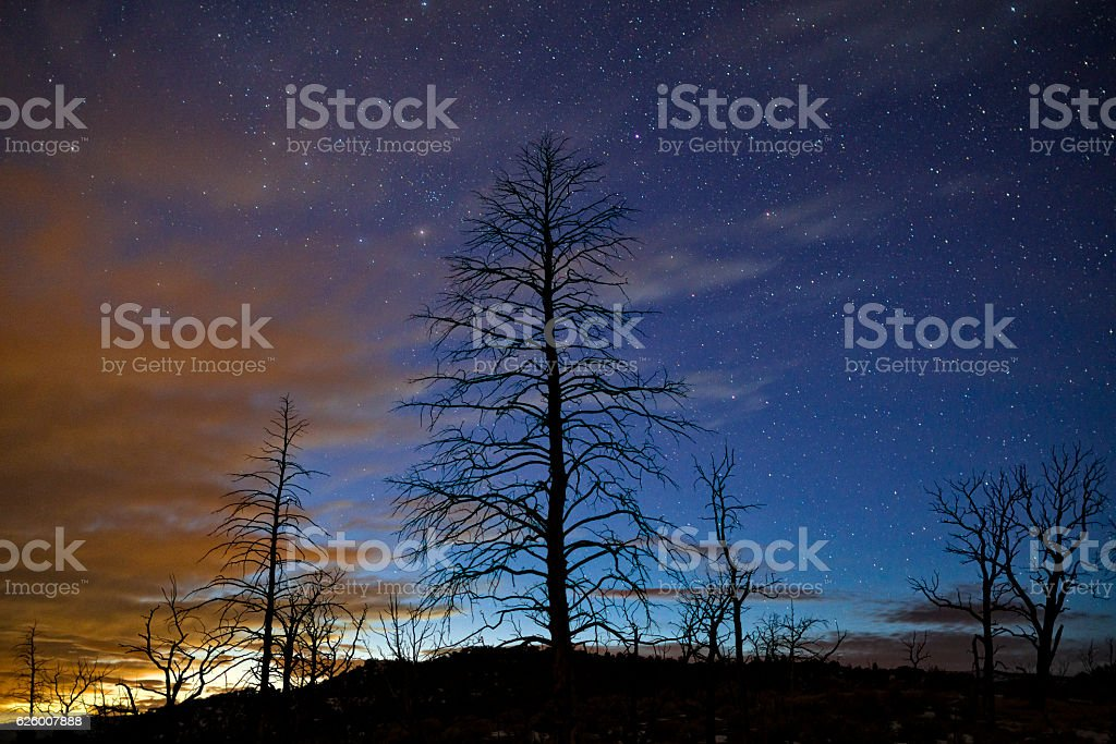 Silhouetted Tree in Burn Area Night Sky with Stars stock photo