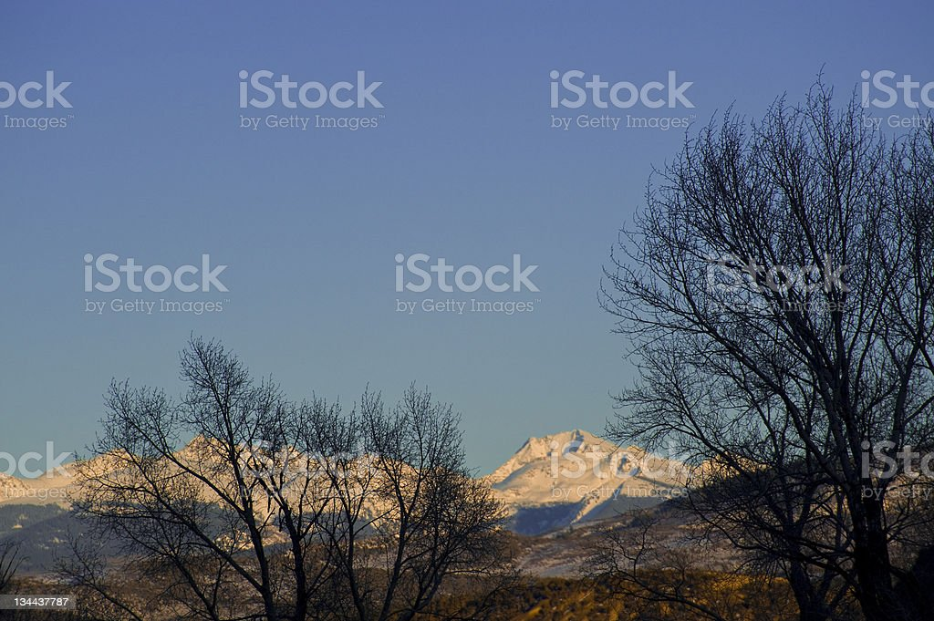 Silhouetted Trees Mountain Backdrop royalty-free stock photo