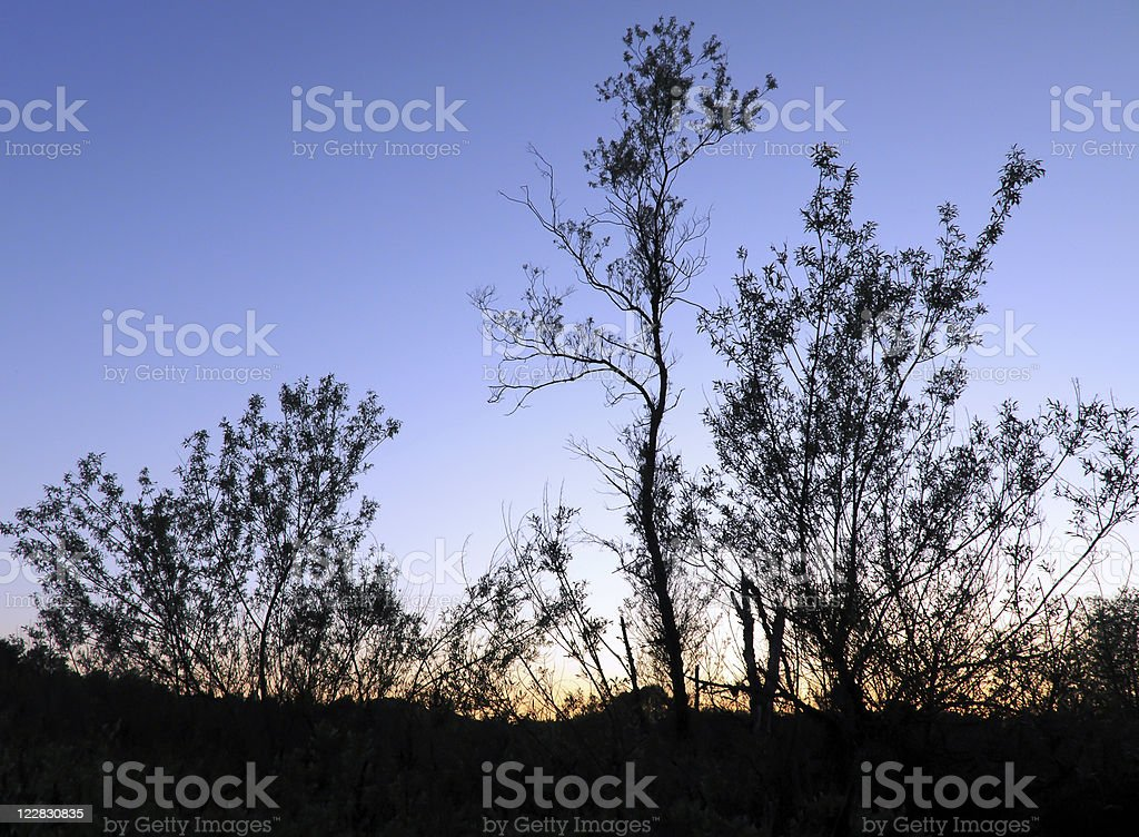 Silhouetted Trees stock photo