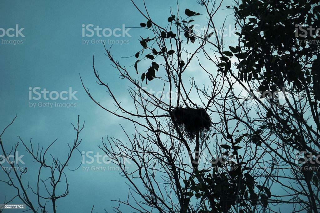 Silhouettes bird net on the tree royalty-free stock photo