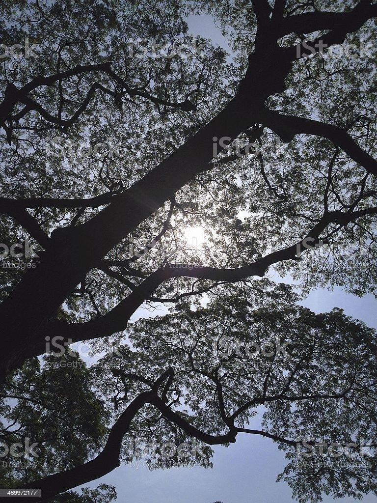 Силуэты подробные ветки дерево с солнечных лучей и голубое небо Стоковые фото Стоковая фотография