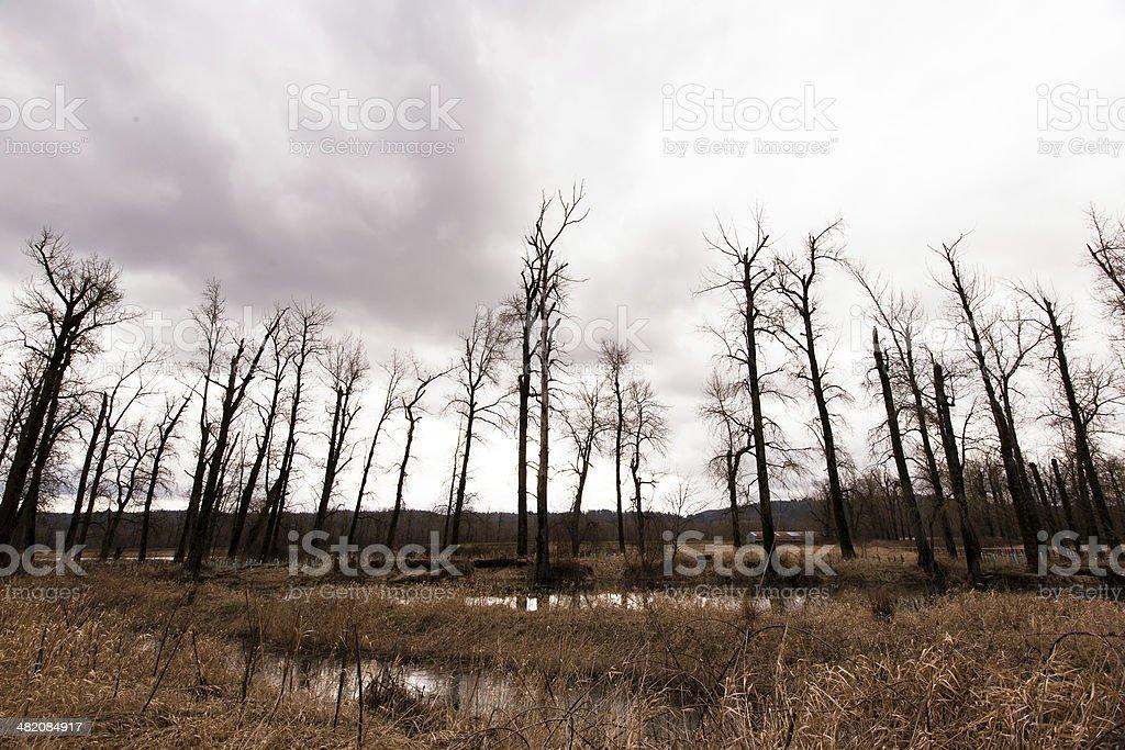 Silhouette di alberi nudi contro un cielo Tempesta foto stock royalty-free
