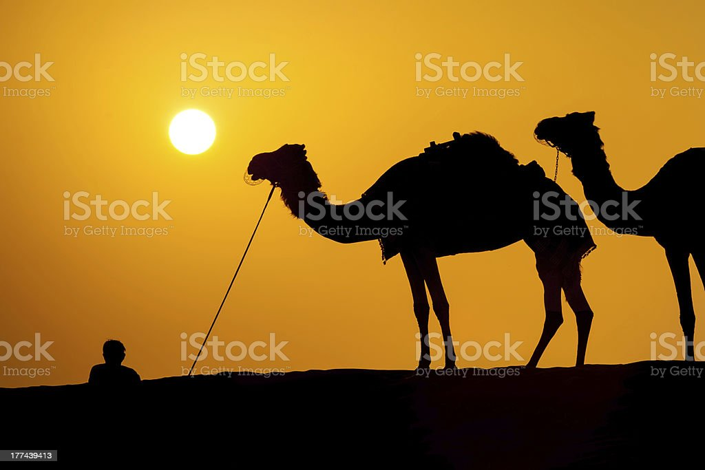 Silhouettes of camels in a desert royalty-free stock photo