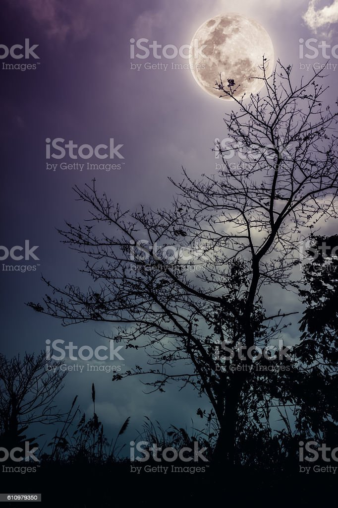Silhouettes of dry tree against night sky bright moon. Outdoors. stock photo