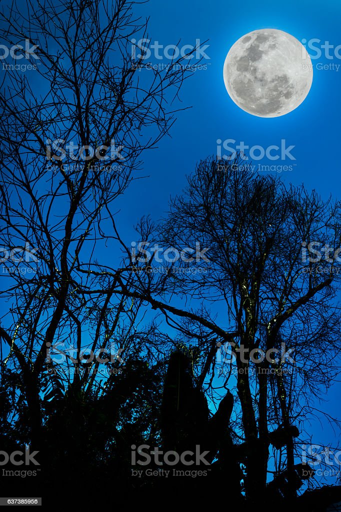 Silhouettes of dry tree against sky and beautiful full moon. stock photo