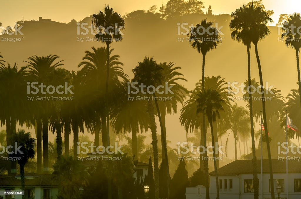 Silhouettes of palm trees and hazy sunset stock photo