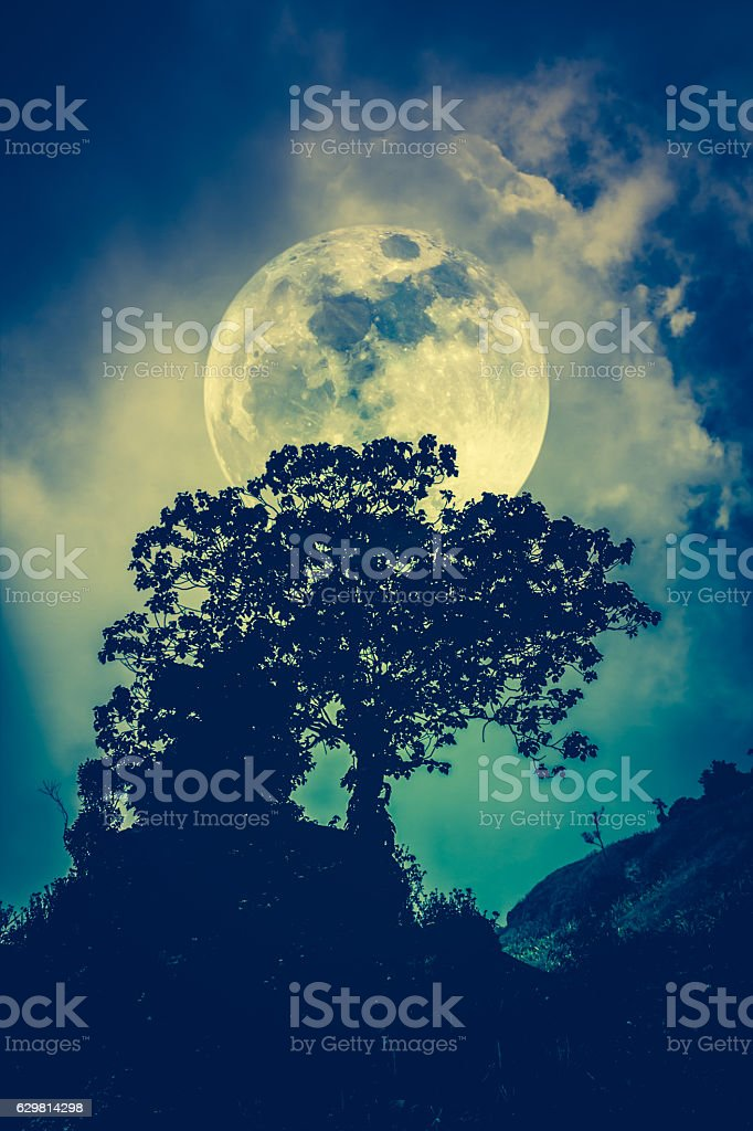 Silhouettes of tree against sky over tranquil sea. Nature backgr stock photo