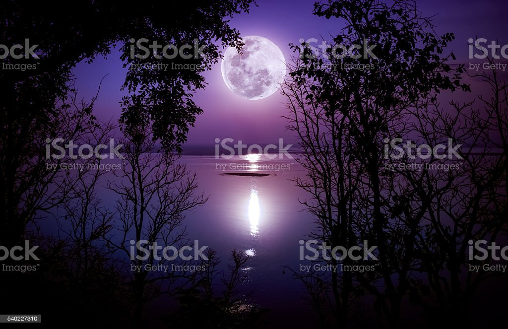 Silhouettes of woods and beautiful moonrise, bright full moon. stock photo