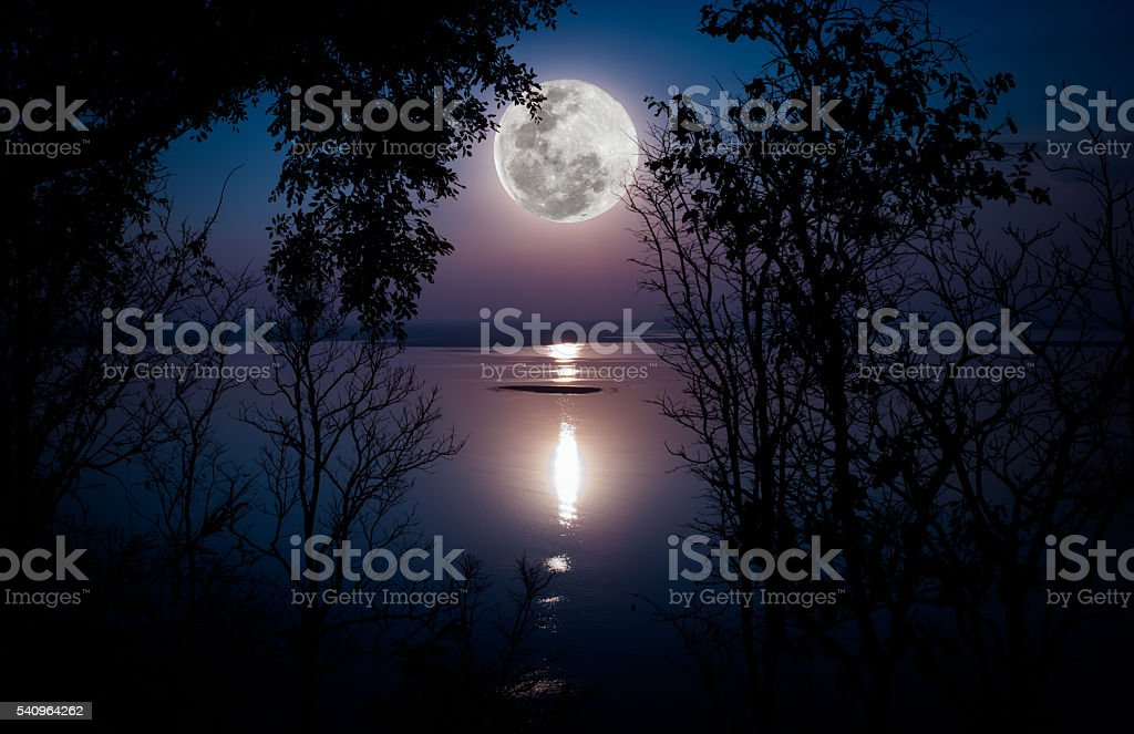 Silhouettes of woods and beautiful moonrise, bright full moon wo stock photo
