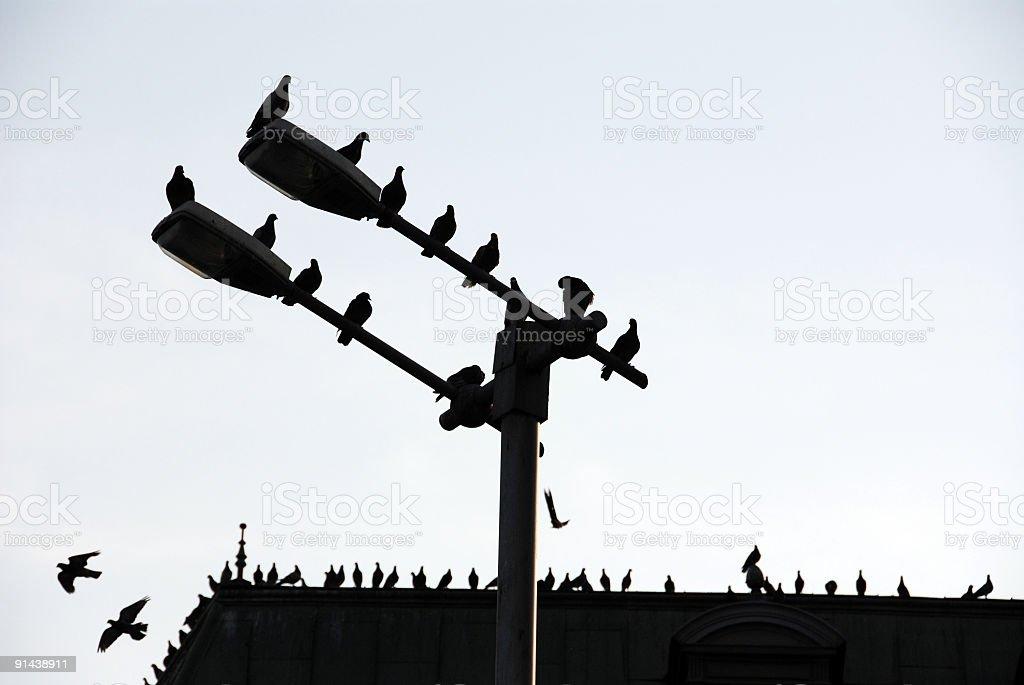 Silhouettes stock photo