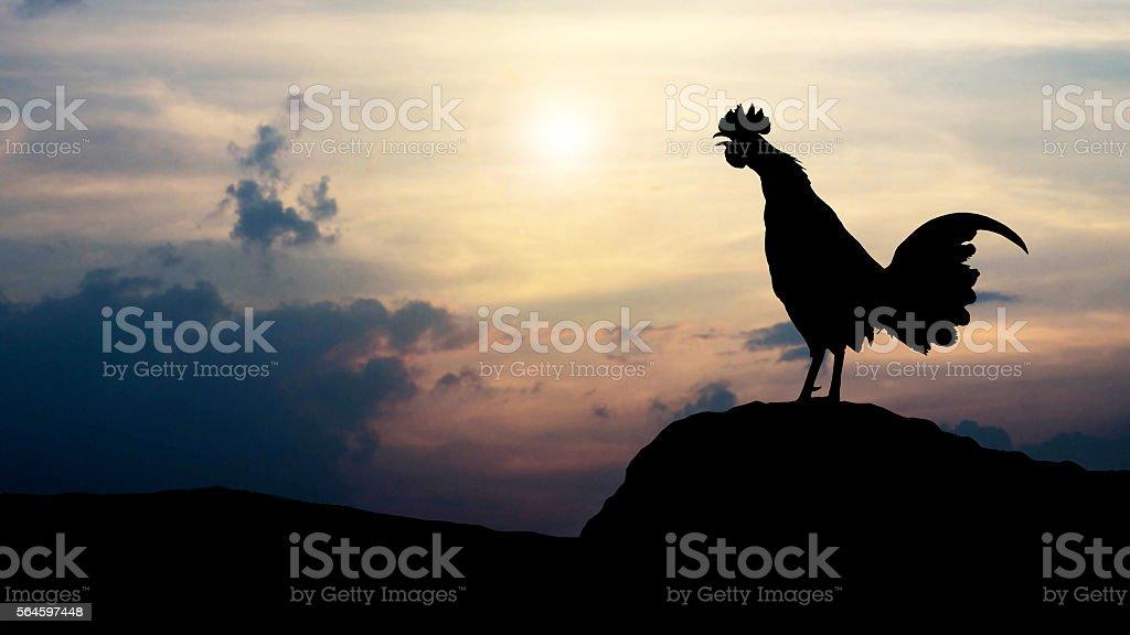 Silhouettes rooster crows in the morning foto de stock libre de derechos