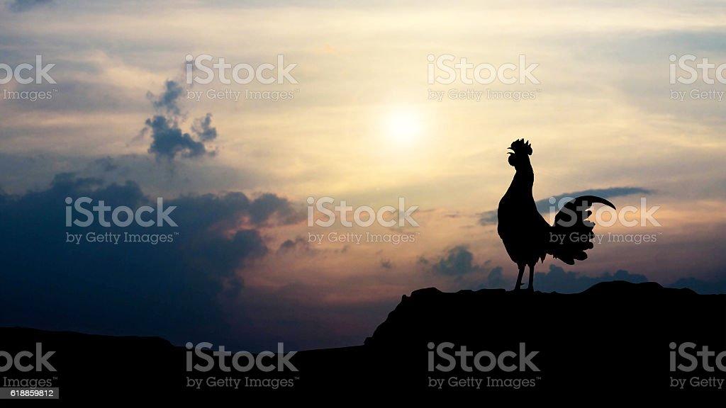 Siluetas gallo cornejas por la mañana foto de stock libre de derechos