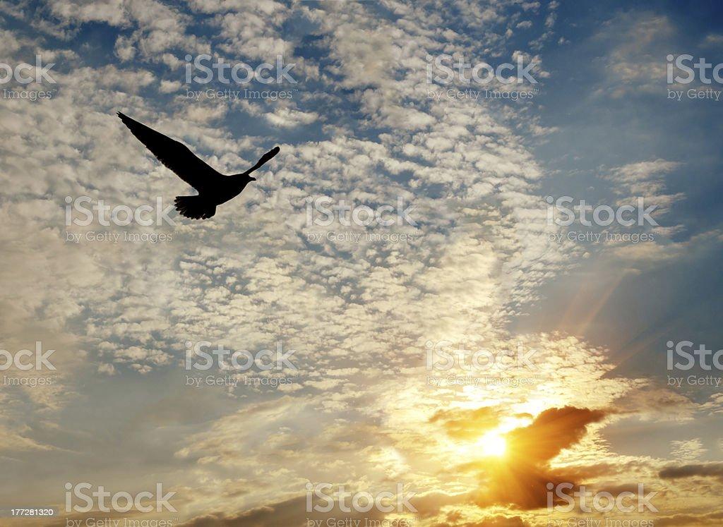 Silhoutte z ptak latający na zachód słońca zbiór zdjęć royalty-free