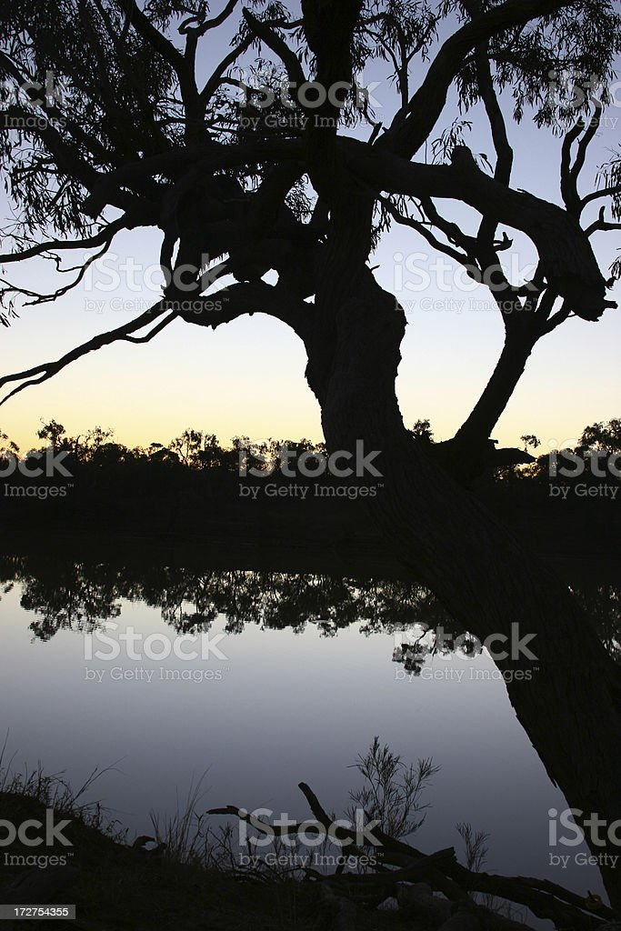 Silhoutte of Tree at Sunset stock photo