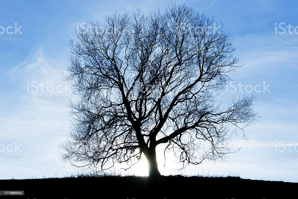 Silhuette of tree against blue sky royalty-free stock photo