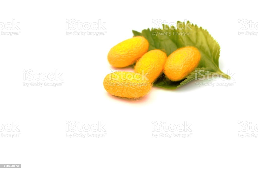 Silk Cocoons with Silk Worm on Green Mulberry Leaf on white. stock photo