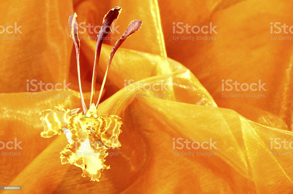 Silk&Orchid royalty-free stock photo