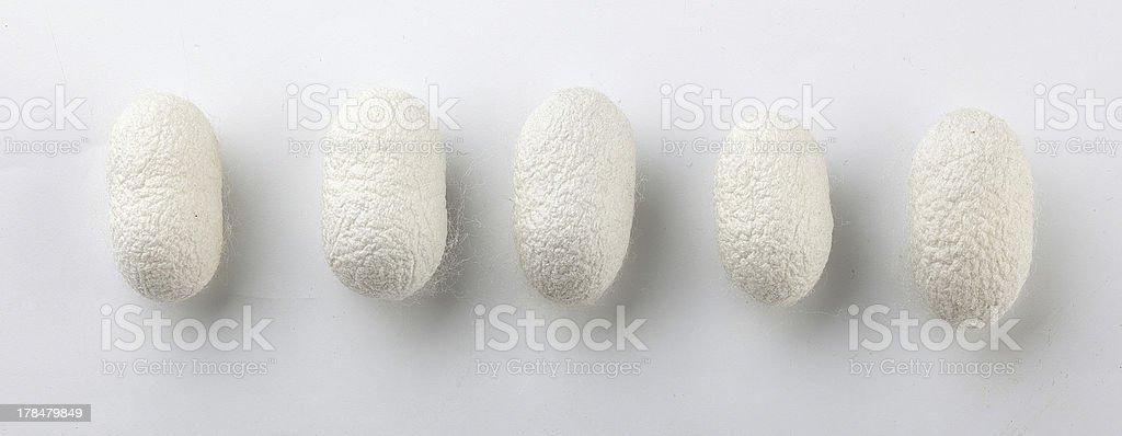 Silkworm's cocoon stock photo