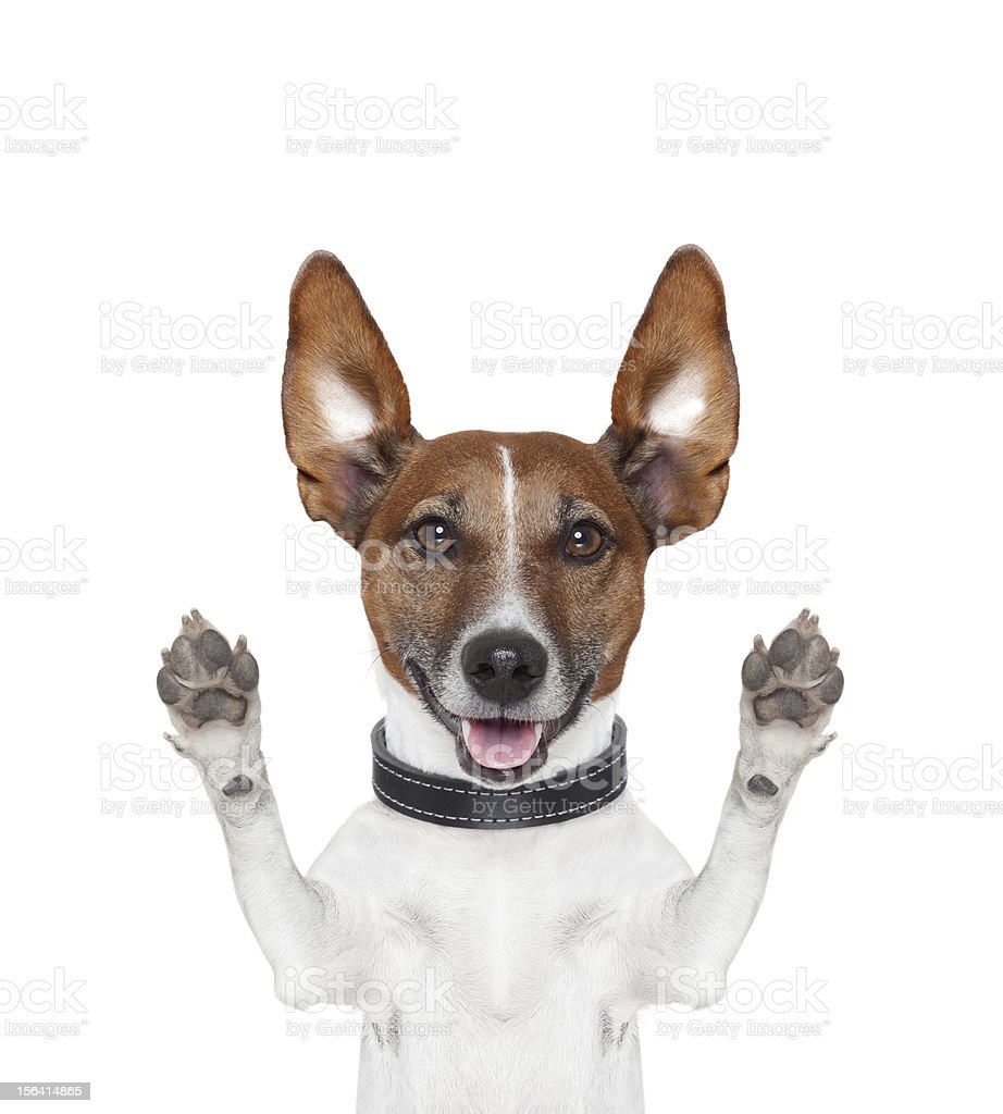 silly crazy paws up dog stock photo