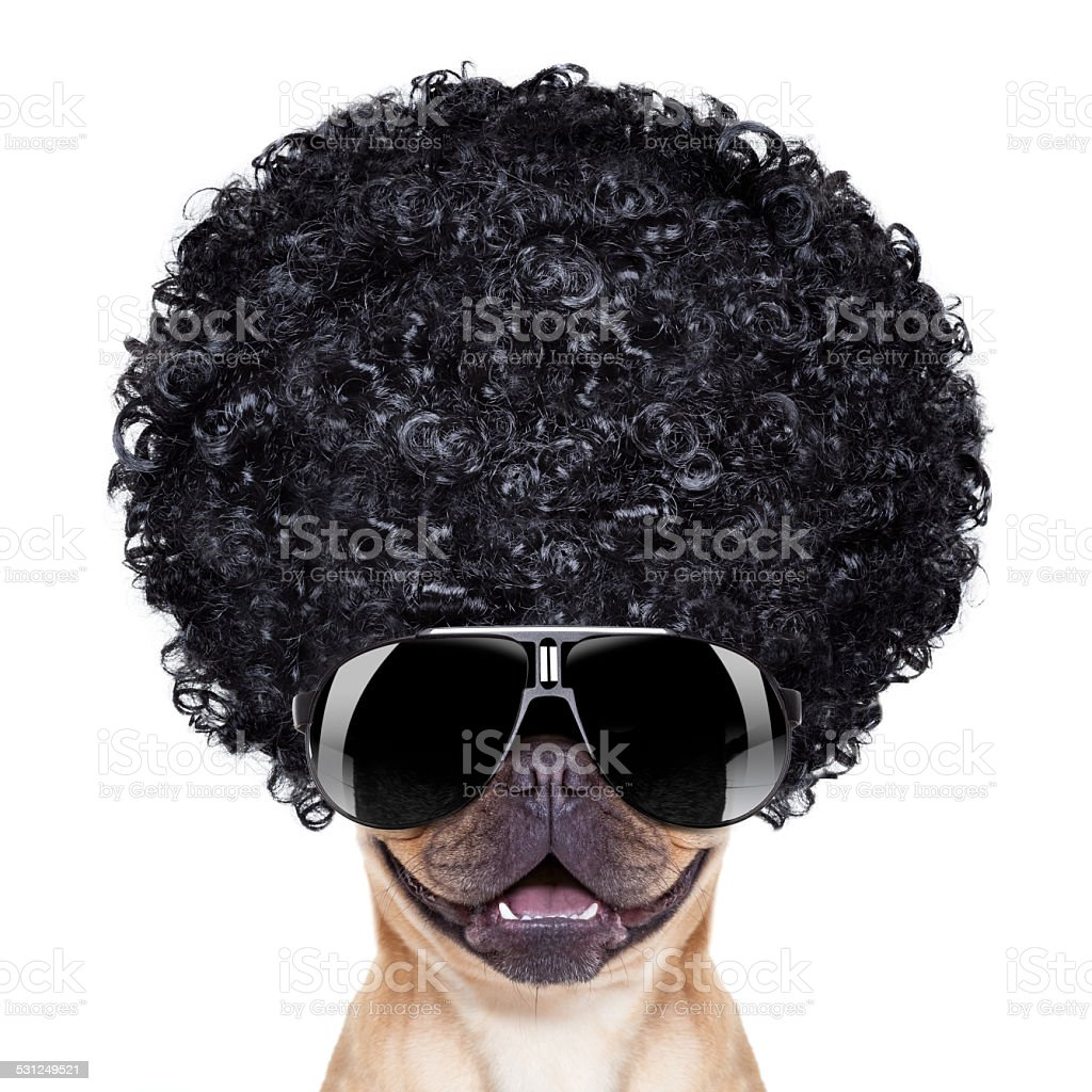 silly dog stock photo