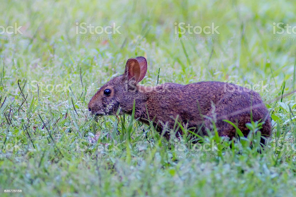 Silly Rabbit stock photo