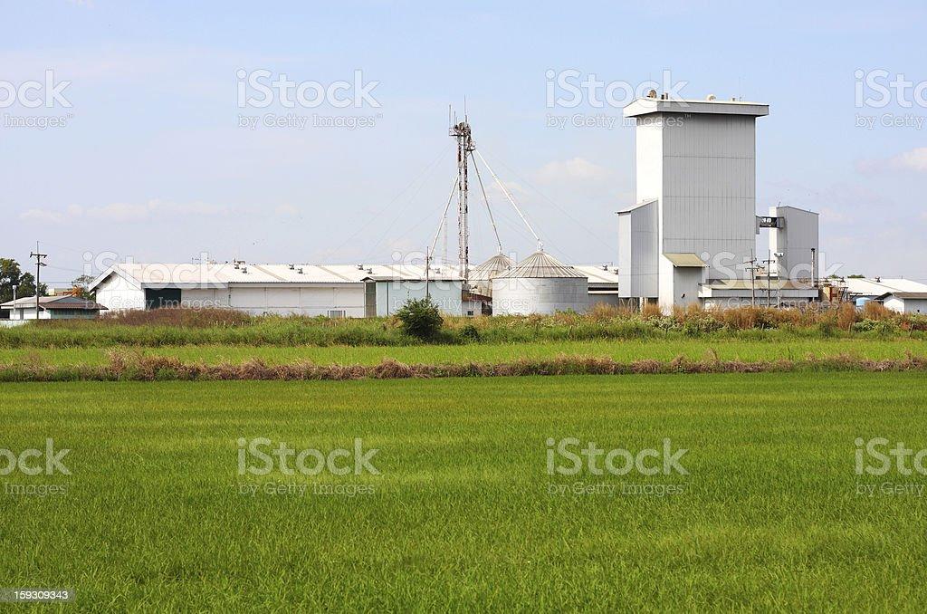 silo on rice field, Thailand. stock photo