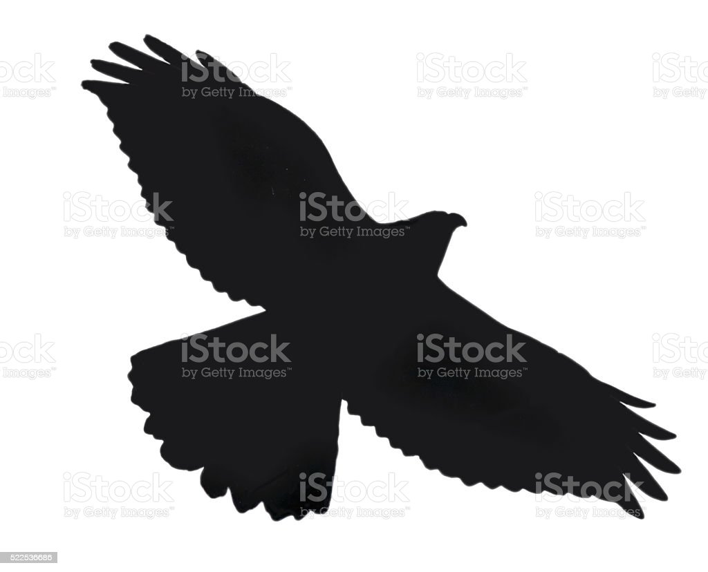 Silohuette of hawk with clipping path stock photo