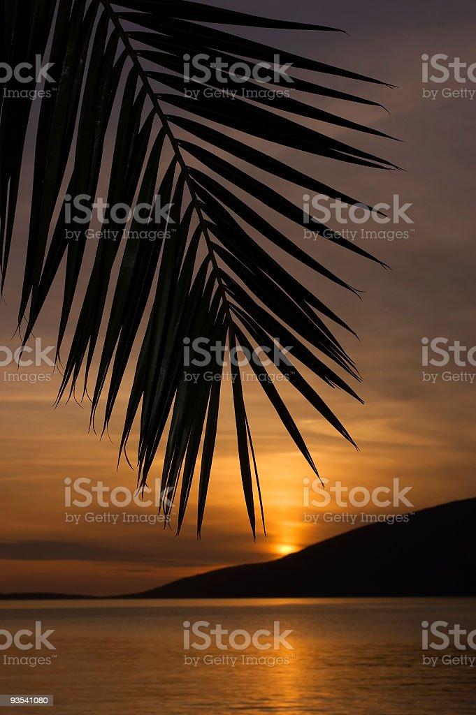 Silouette di palma foto stock royalty-free