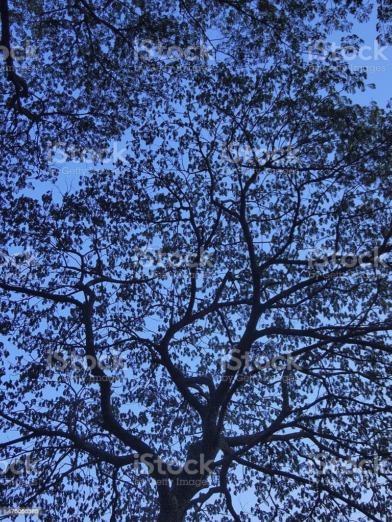 siluette tree stock photo