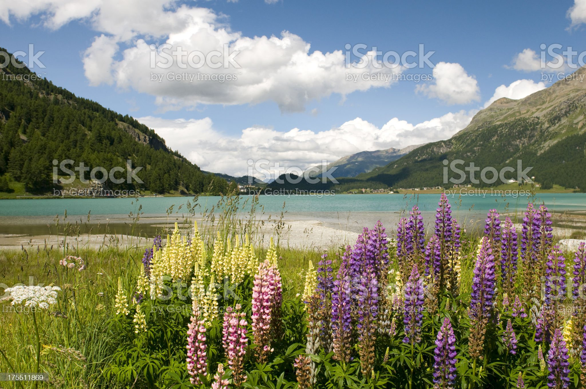Silvaplana lake royalty-free stock photo