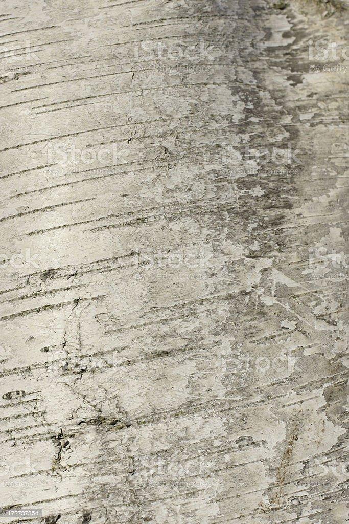 Silver birch bark like brushed silk royalty-free stock photo