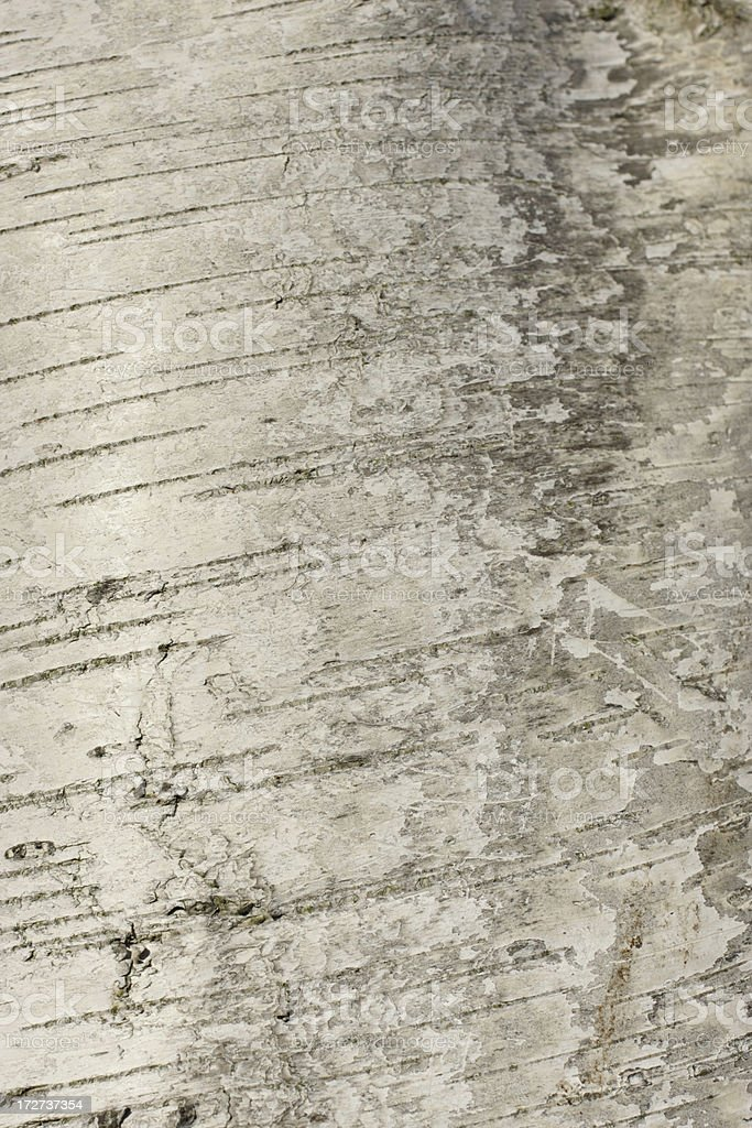 Silver birch bark like brushed silk royalty-free stock photo