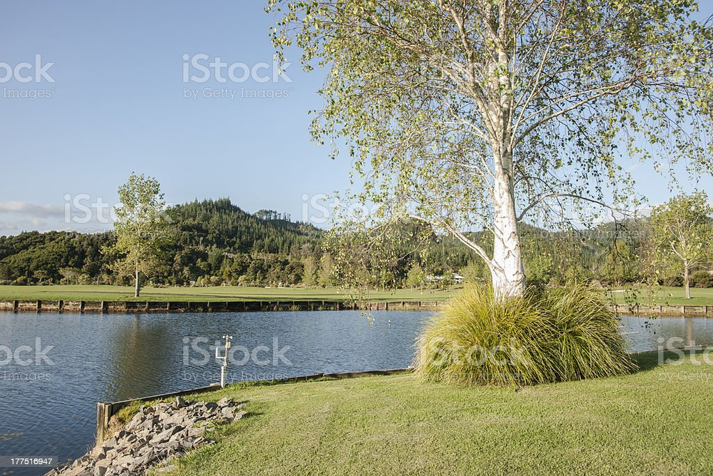 Silver birch tree and lake. royalty-free stock photo