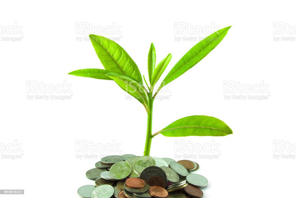 Silver coins with young plant on white background stock photo