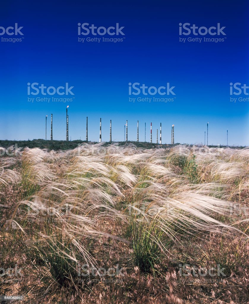 Silver Feather grass steppe on a background of a processing plant. stock photo