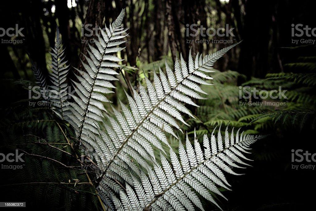 Silver Fern New Zealand stock photo