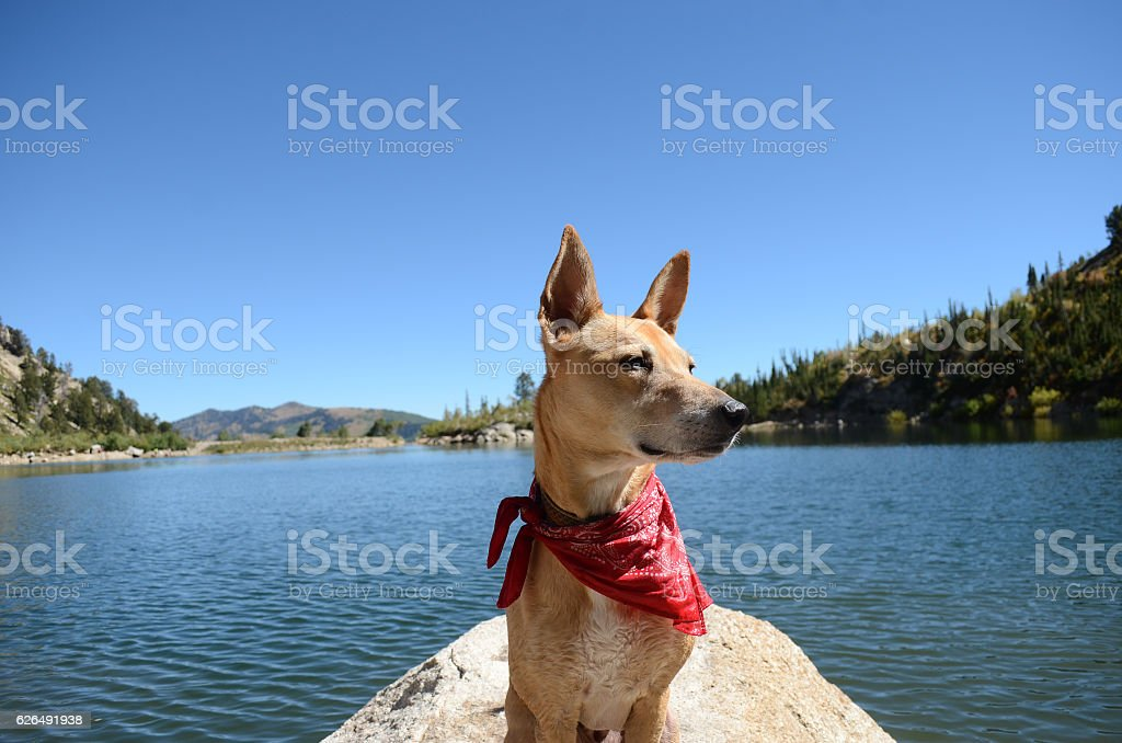 Silver Lake Utah Dog Portrait stock photo