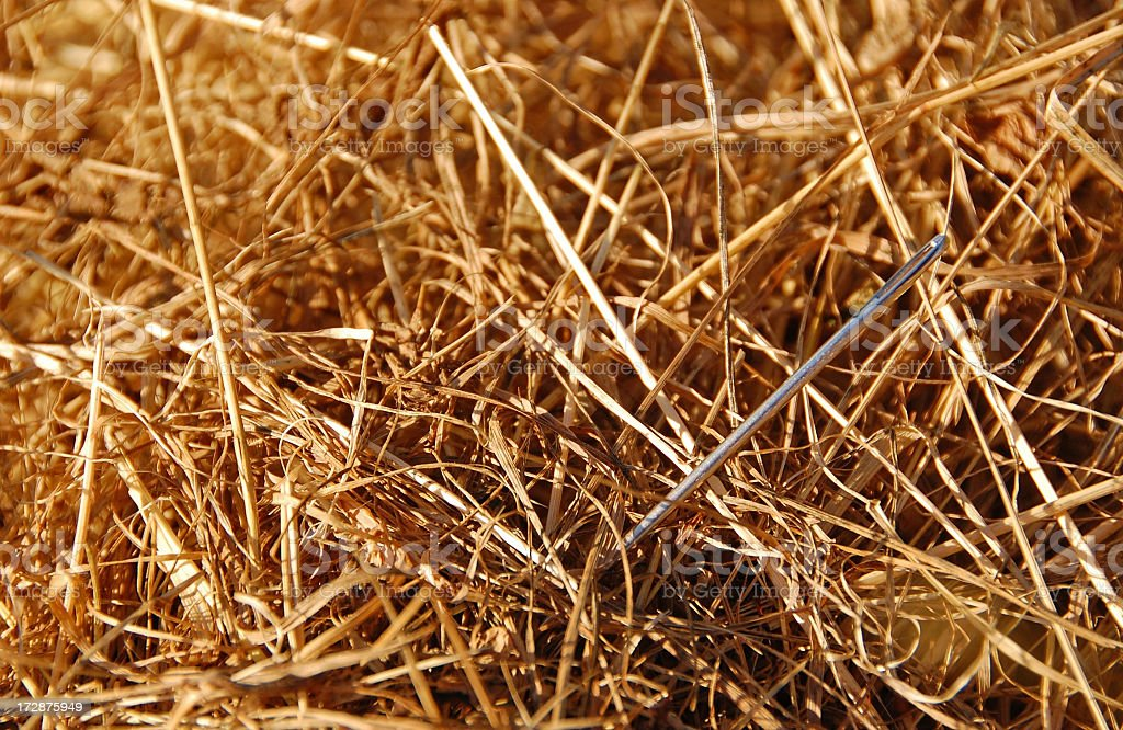 Silver needle nestled in a haystack stock photo