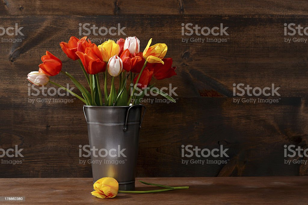 silver pail of tulips royalty-free stock photo