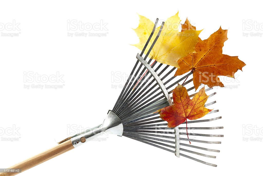 Silver rake with wooden handle and orange leaves on it stock photo