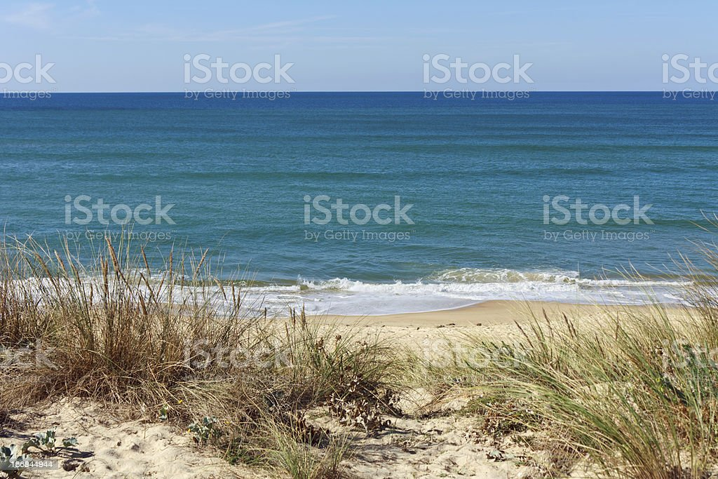 Cote d'Argent - Dunes with grasses stock photo