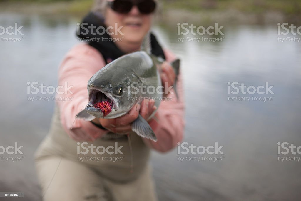 Silver Salmon Caught Fly-fishing in Alaska royalty-free stock photo