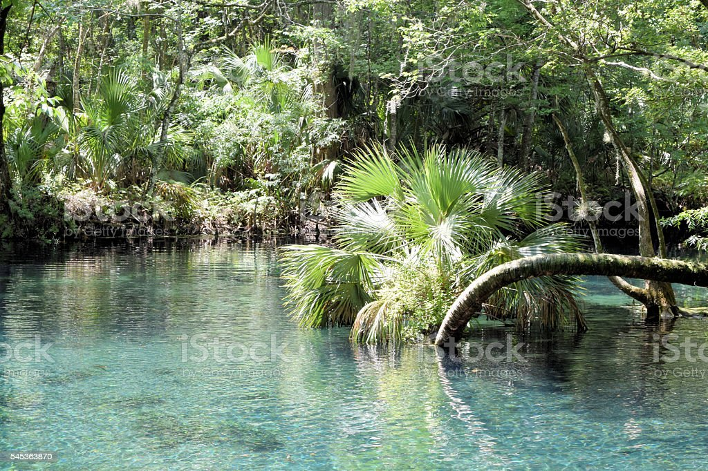 Silver Springs Florida stock photo