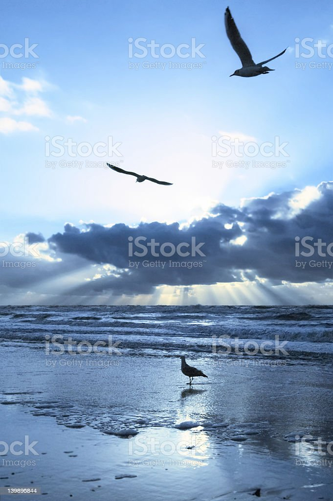 Silver Sunset royalty-free stock photo