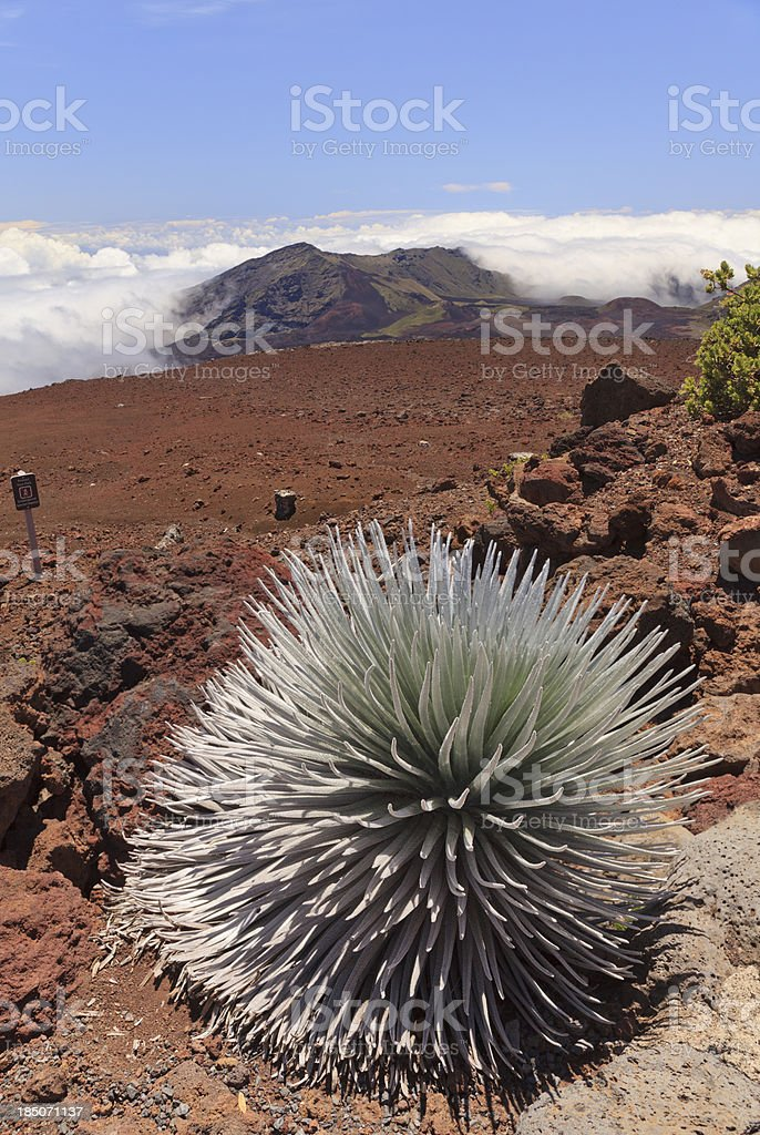 Silversword and Haleakala Crater, Maui, Hawaii royalty-free stock photo