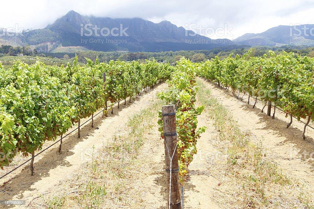 Simonsberg - Stellenbosch stock photo