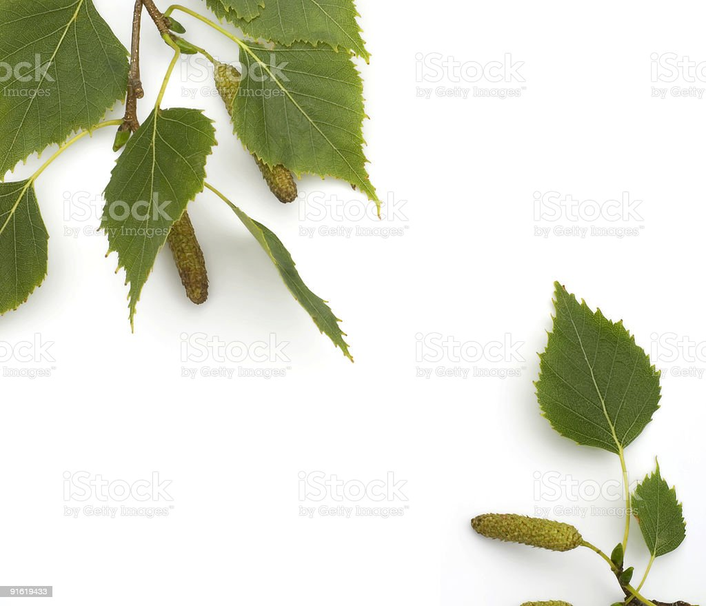 Simple Birch Leaves Frame - Copy Space stock photo
