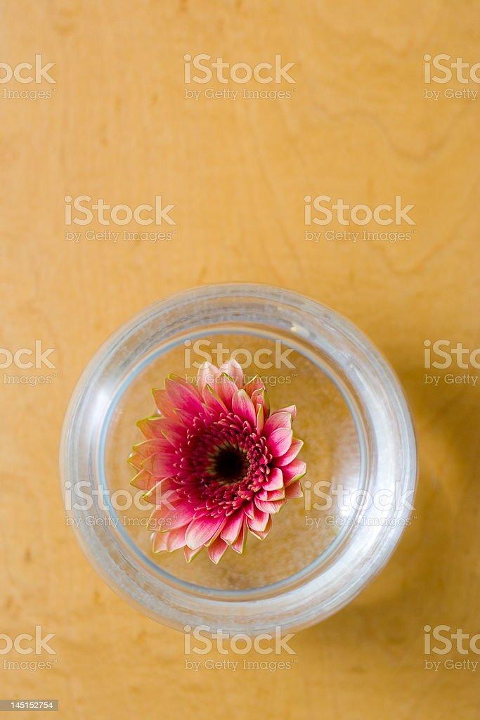 Simple ikebana royalty-free stock photo