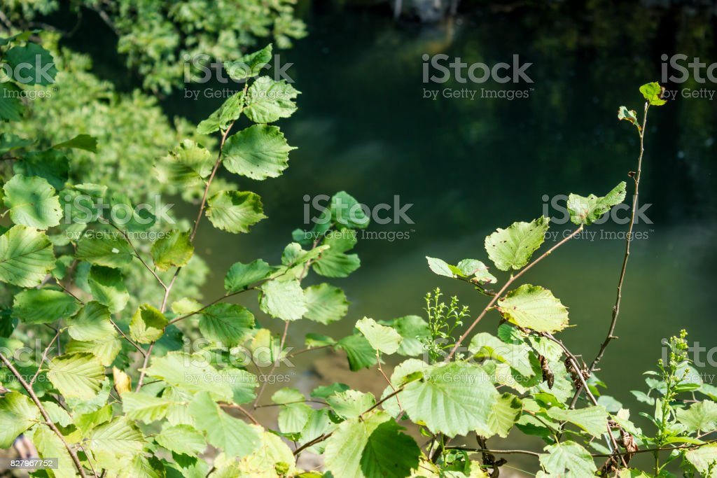Simple natural foliage with a river flowing in the background stock photo
